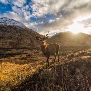 Busreis Wilderness Scotland
